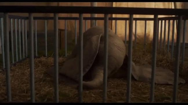 Ready for the new 'Dumbo' trailer?  It's here..