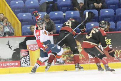 Vipers Drop Close One at Home