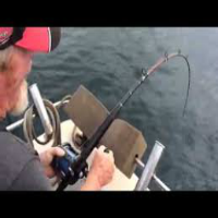 Shark Steals fish right off Line