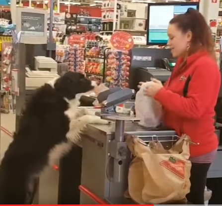 Shopping dog! Shopping dog!