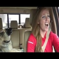 Dog sings along to Queen
