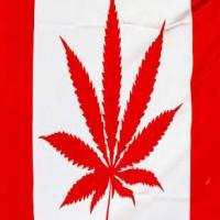 Legalizing Pot in Canada