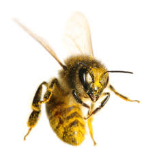 Bee Invasion - What To Do...