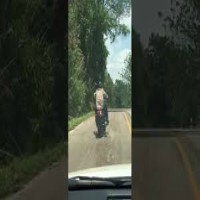Snake Targets Motorcyclist