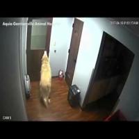 Dog Breaks out of Vet Hospital