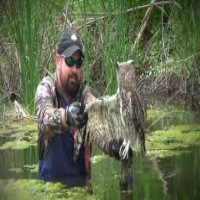 Man Saves Owl Wrapped In Fishing Line
