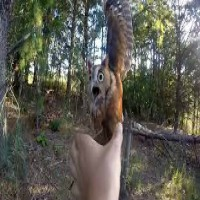Man saves Owl from Fishing line