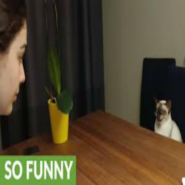 Stubborn cat vocally argues with owner