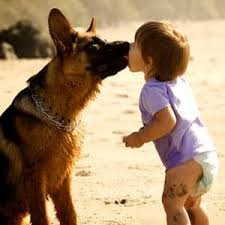 Big Dog Teaches Little Dog To Sit - Awesome!!!!