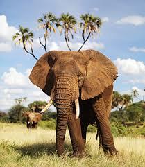 Elephants Rush To Save Drowning Baby Elephant