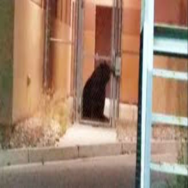 Bear Breaks into Jail