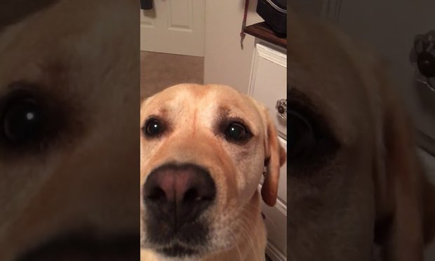 Dog Has Perfect Pitch