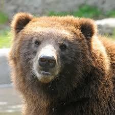 Bears vs Bear-proof Garbage Can