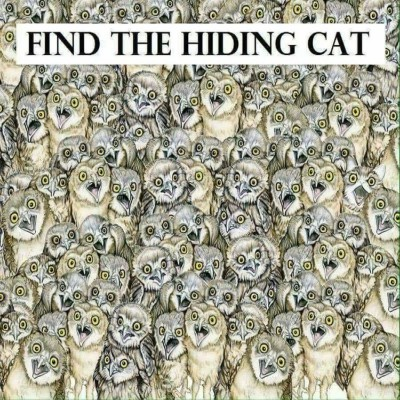 Find the Kitty