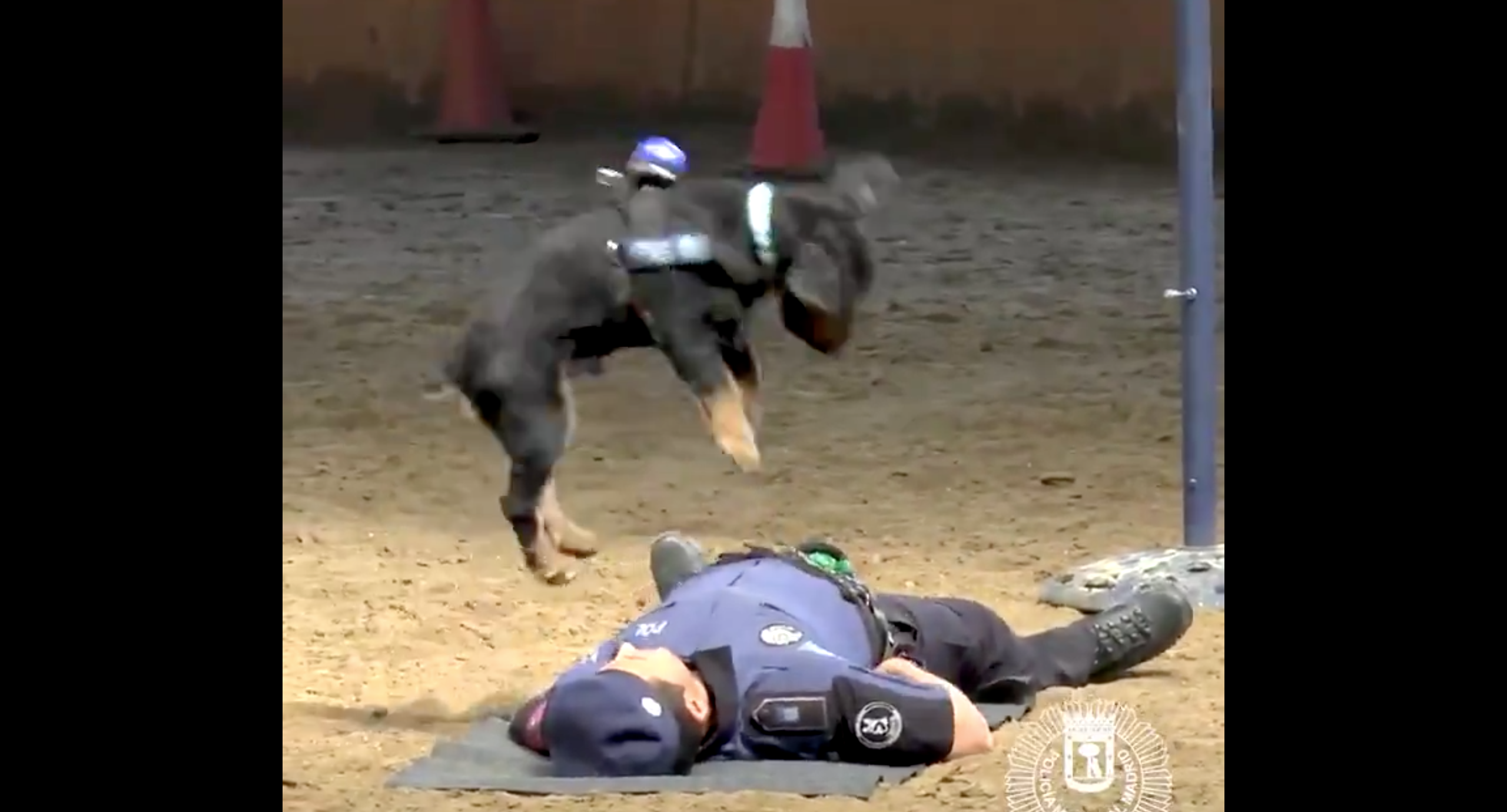 Madrid Police Dog Can Give Humans CPR