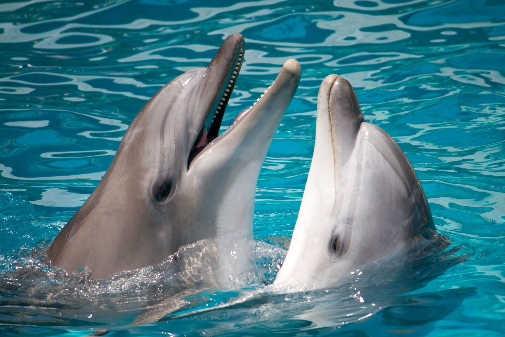 Science has discovered that dolphins call each other by name.