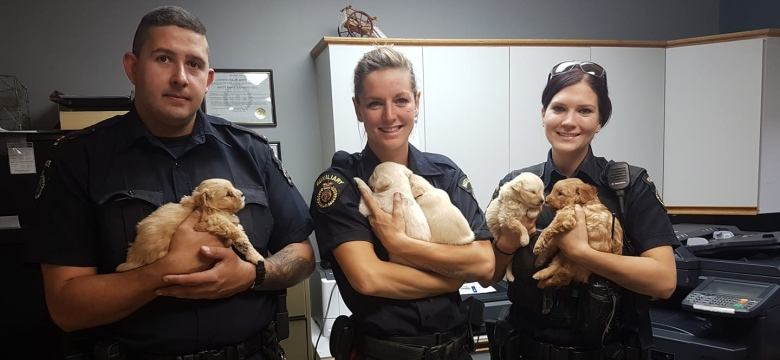 KUDOS: Rivers PD members rescue puppies from underground den.