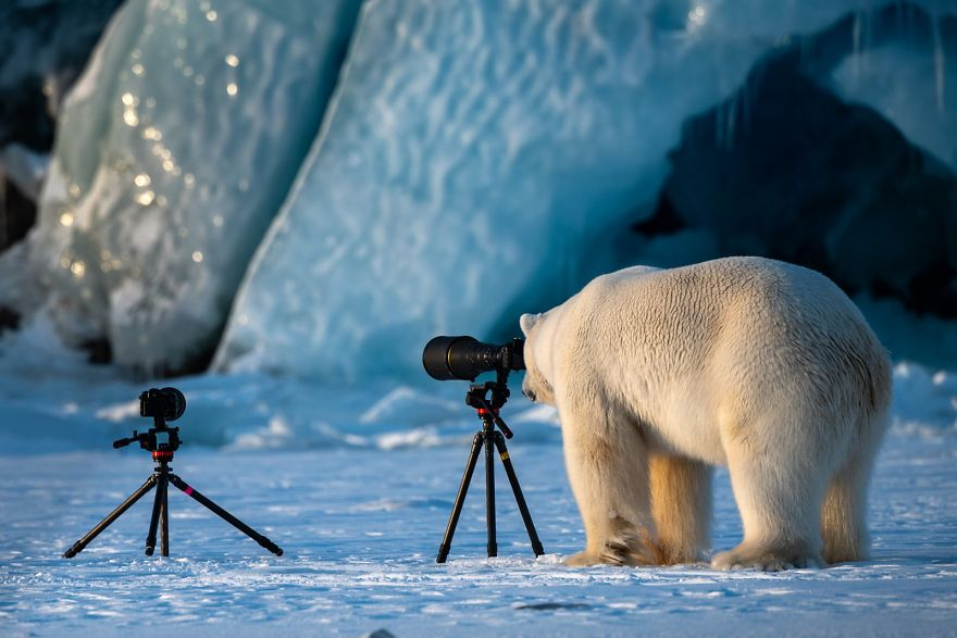 GALLERY: Funniest Nature/Wildlife photos winners for 2018.