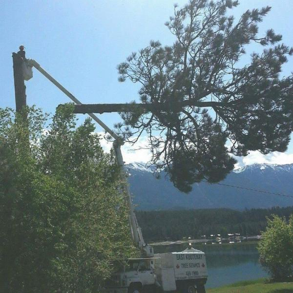Cranbrook residents urged to manage trees after power outage