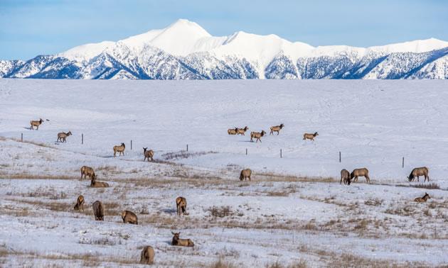 Local wildlife group applauds BC wildlife memorandum