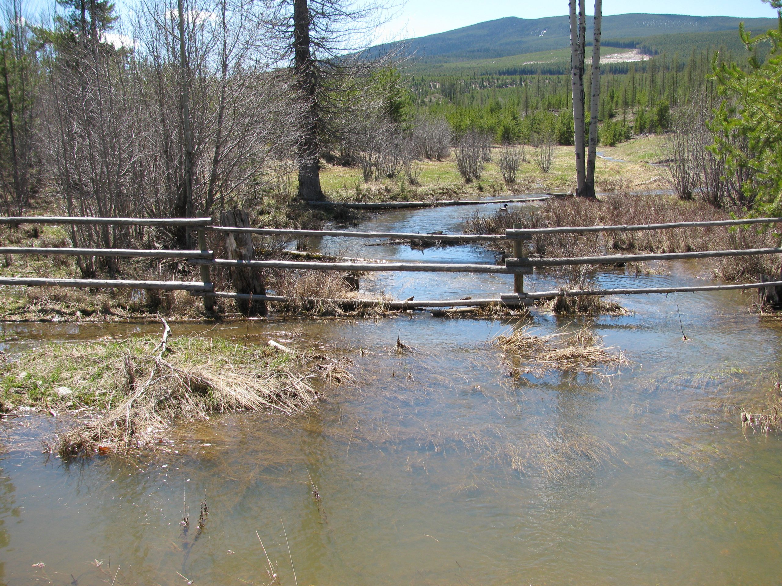 Cranbrook still monitoring local creek and lakes