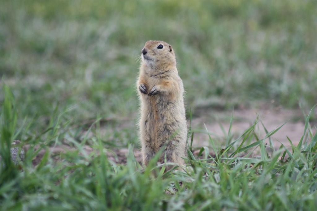Kimberley residents cry foul over rodent management
