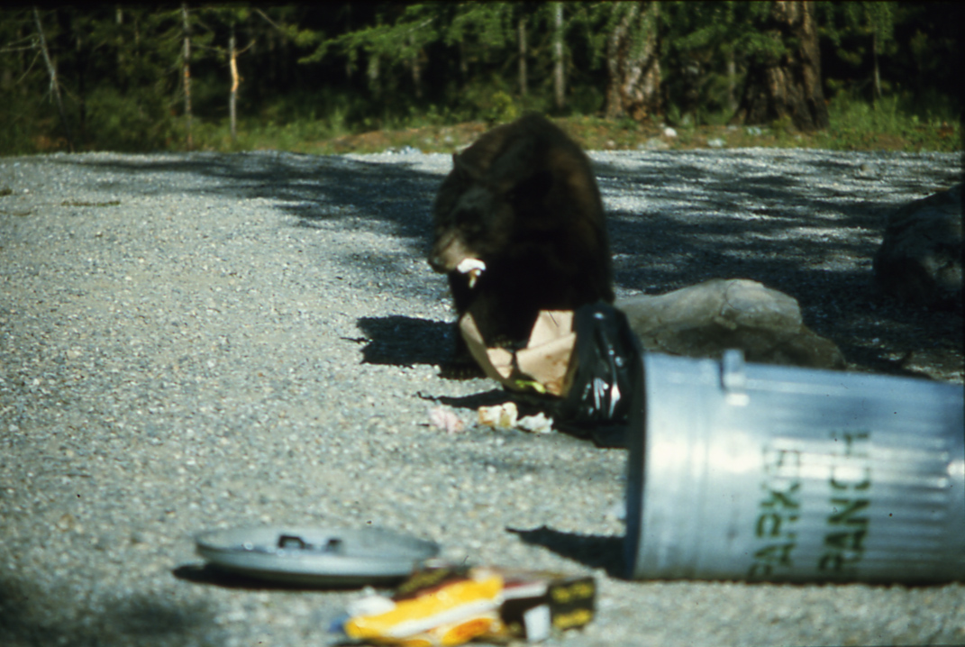 WildsafeBC urging residents to keep garbage away from roaming bears
