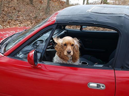 SPCA warns against leaving pets in hot cars
