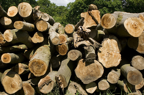 Cranbrook Timber Supply Area allowable annual cut reduced
