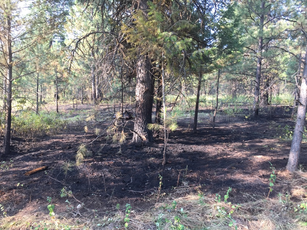 Cranbrook Fire responds to overnight grass fire