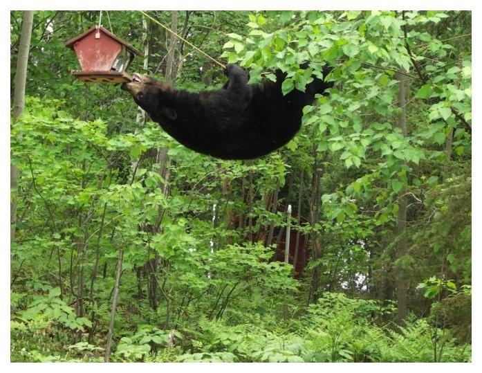 Bird feeder in Fernie ripped apart by hungry bear
