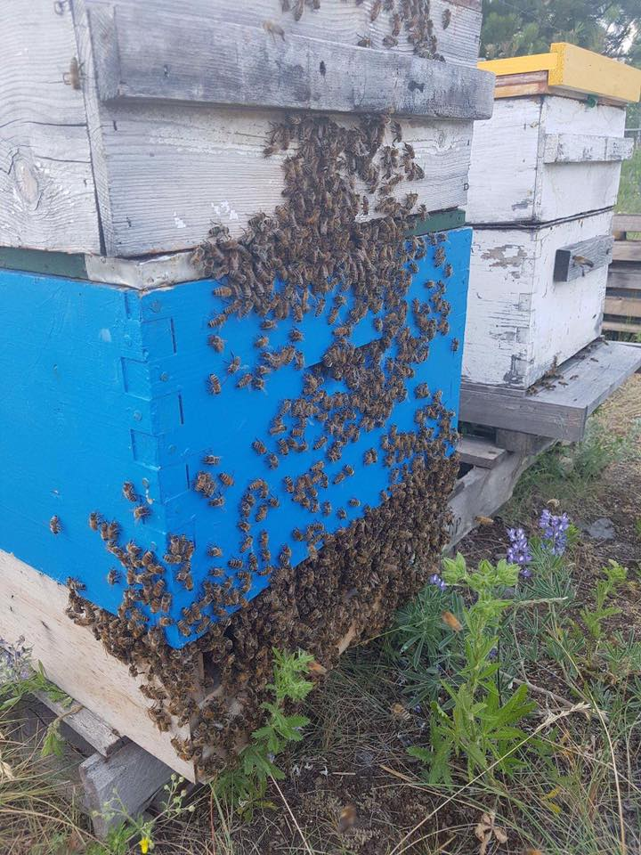 Hive of around 10,000 bees discovered in Marysville chimney
