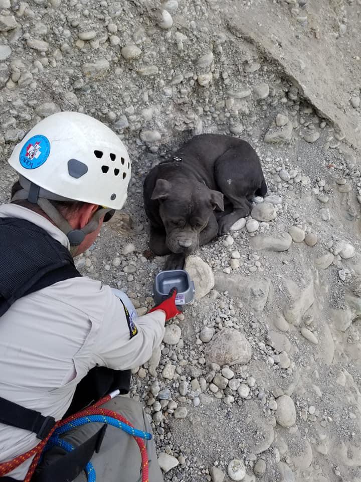 SAR teams rescue dog off cliffside near Wardner