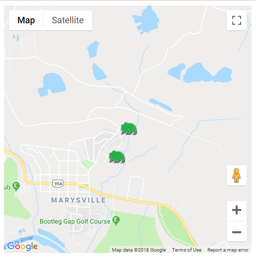 Two grizzlies spotted around Marysville