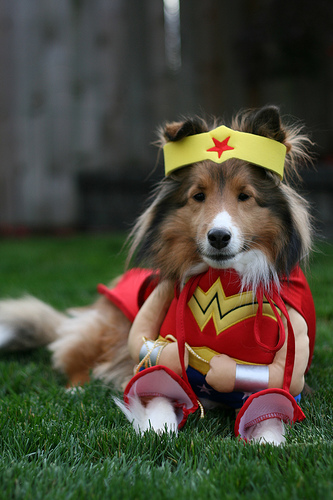 What is your Pet going to be for Halloween? I've got a few ideas...