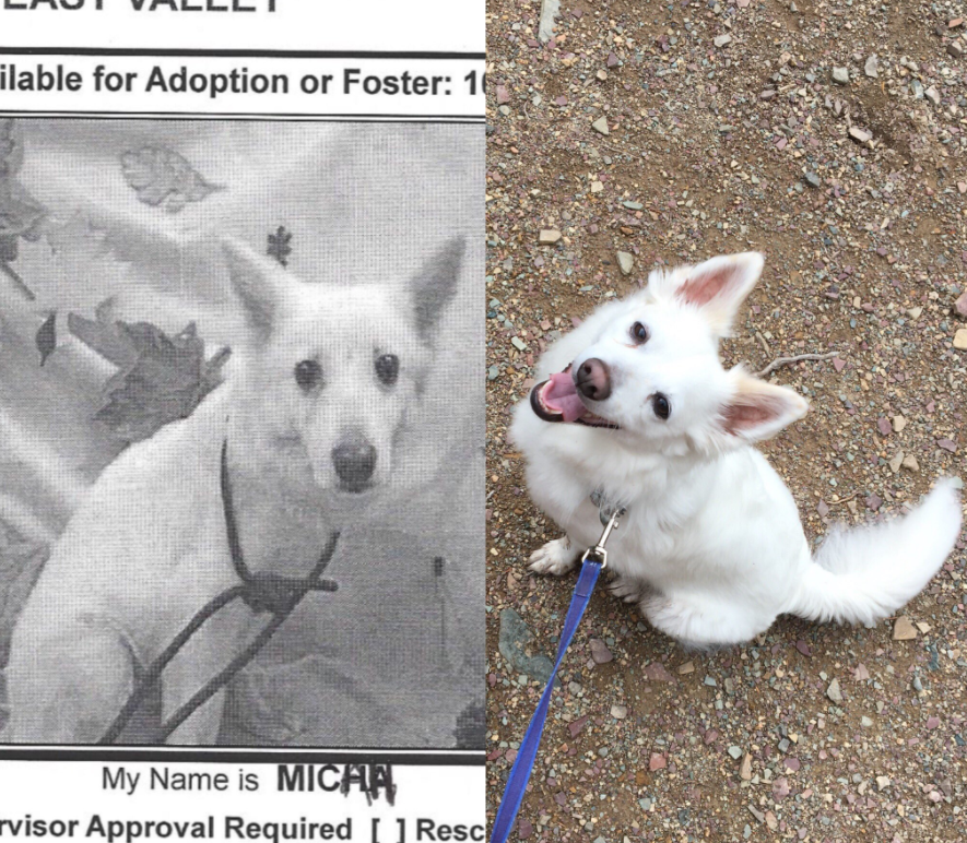 Pictures Of Dogs Before And After Their Adoption #AdoptDontShop