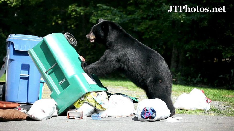 Bear complaint calls rise in Oceanside