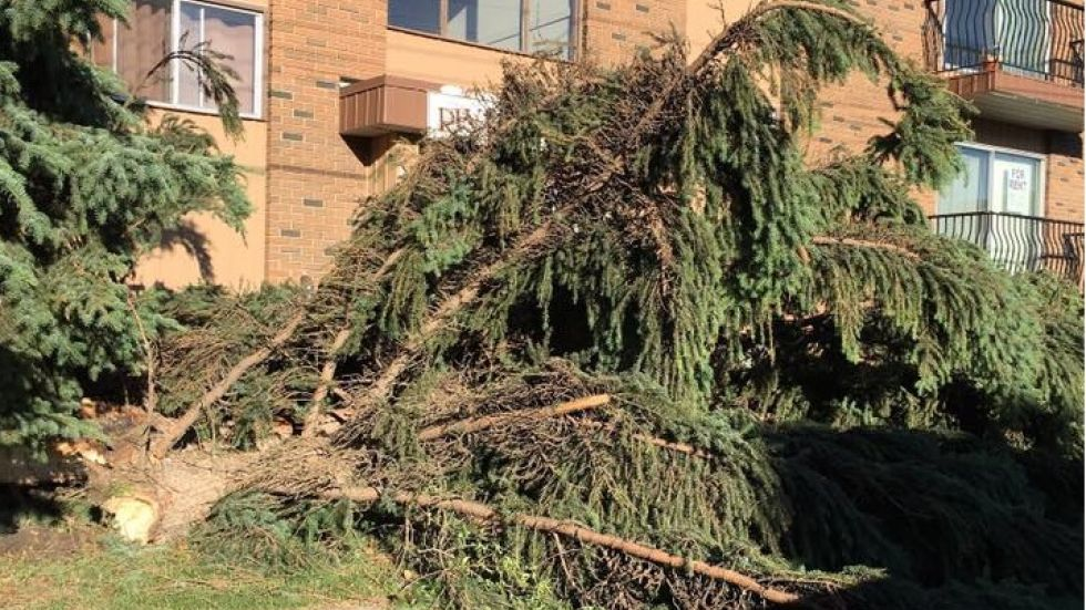 Storm recovery continues in Red Deer