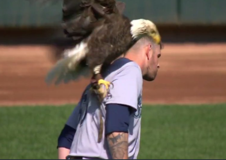 The Eagle Has Landed, On Ladner's James Paxton