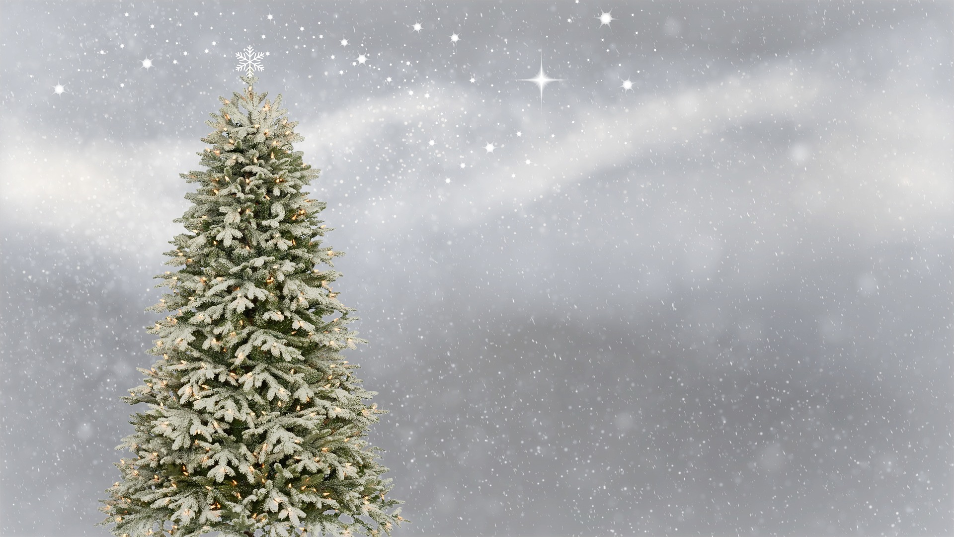 Find Out How/Where To Recycle Your Christmas Tree This Year!
