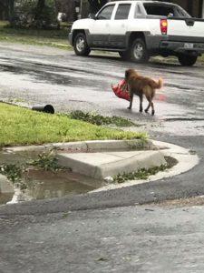 dog-and-his-food-bag