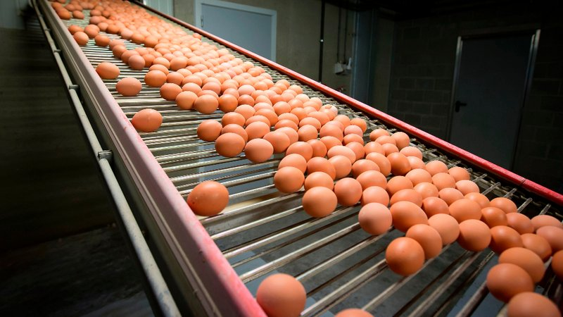 TAINTED EGGS IN EUROPE