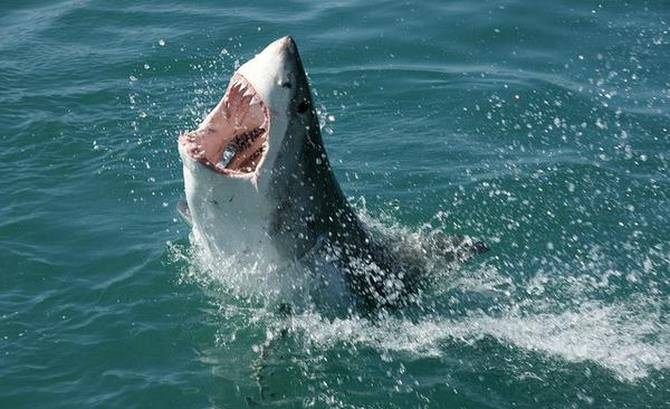 SHARKS SPOTTED OFF THE SOUTH SHORE OF NOVA SCOTIA