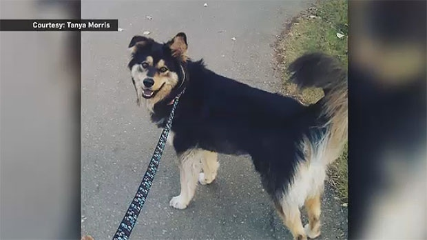 FOZZY THE DOG HAS BEEN FOUND!!!
