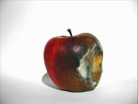 CONTROLLING APPLE ROT