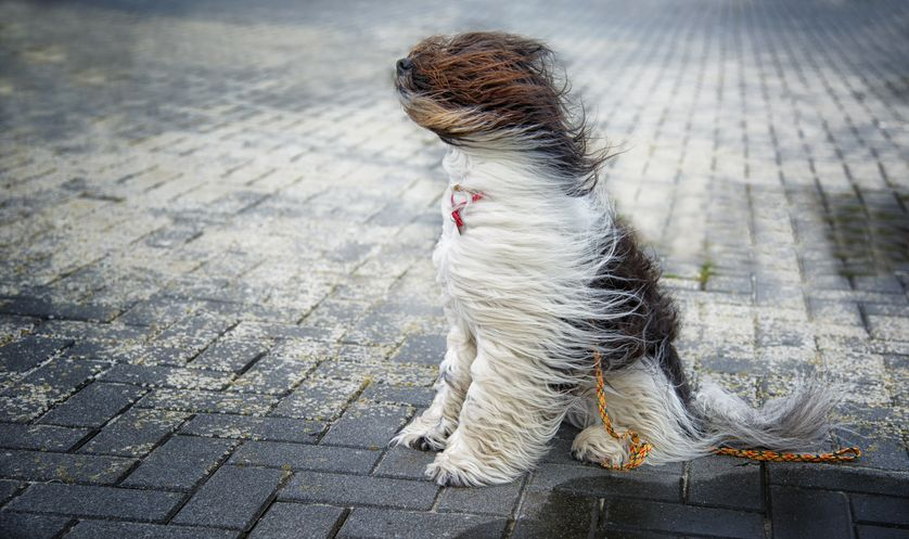 BLUSTERY DAY AHEAD