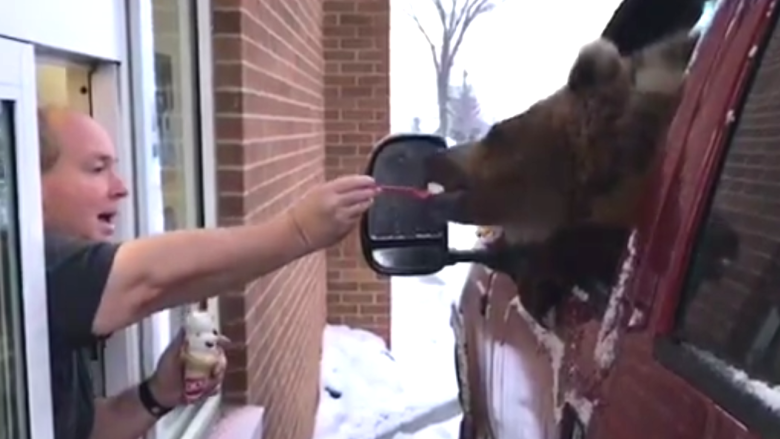 OWNERS OF DISCOVERY WILDLIFE PARK CHARGED AFTER BEAR IS TAKEN FOR ICE CREAM