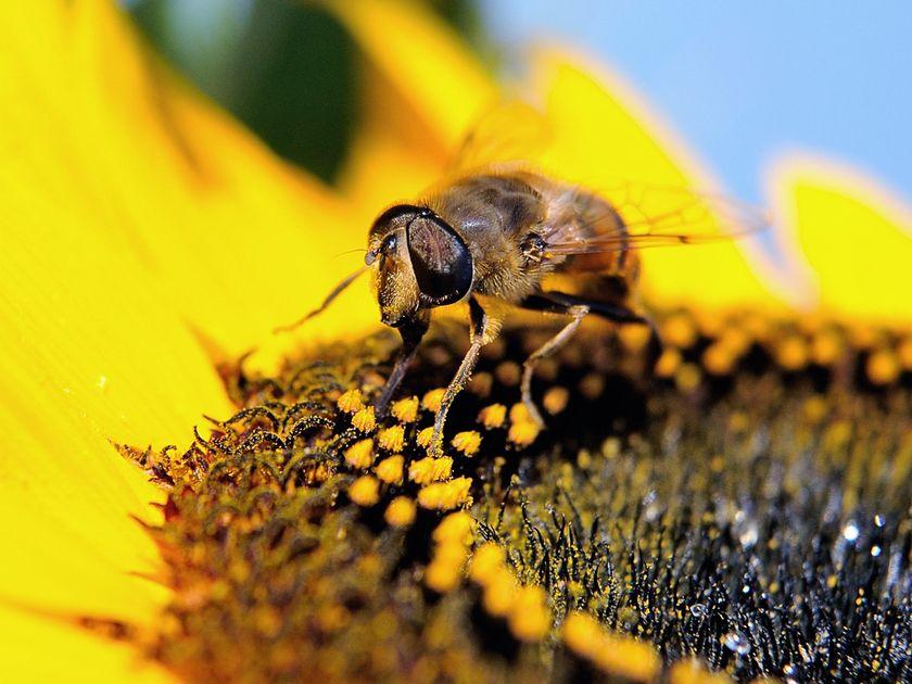 BEE LOSSES
