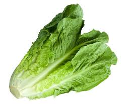 ROMAINE LETTUCE DEEMED SAFE TO EAT AGAIN