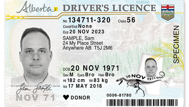 DINOSAURS ON THE INCOMING ALBERTA DRIVERS' LICENCES